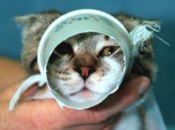 Restraining A Cat Pet Diy Projects Pet Vet Vet Tech