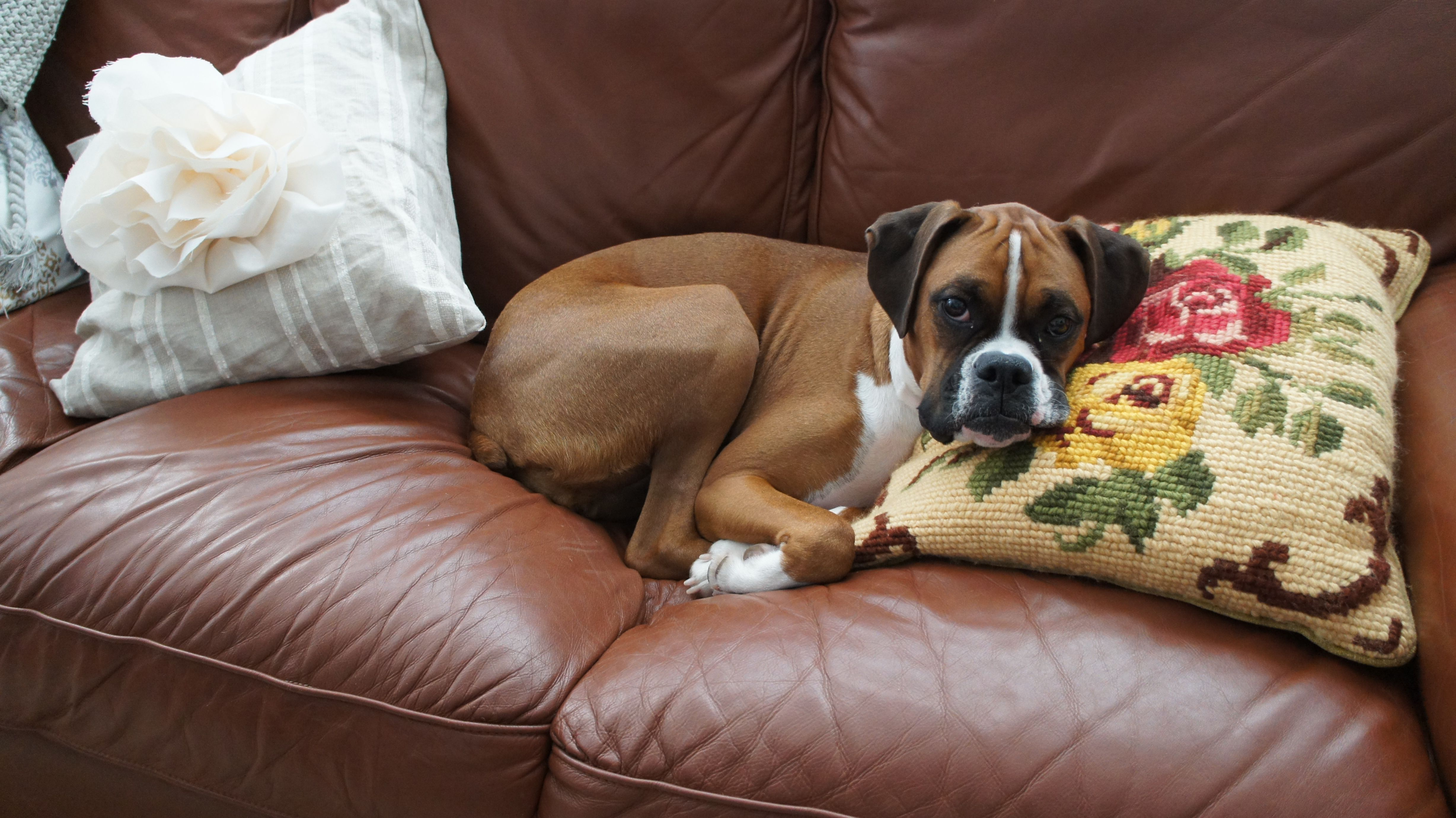 Cuddling with her favorite pillow.
