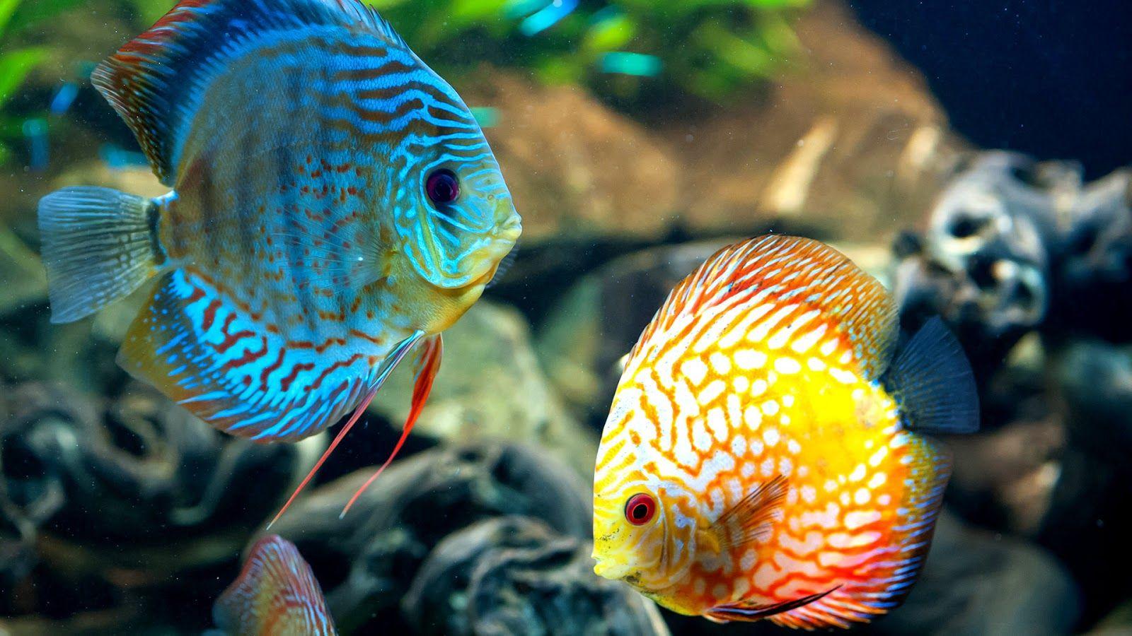 Pin By Derald Hallem On Sea Life Corral Reefs Fish Wallpaper Aquarium Fish Beautiful Fish