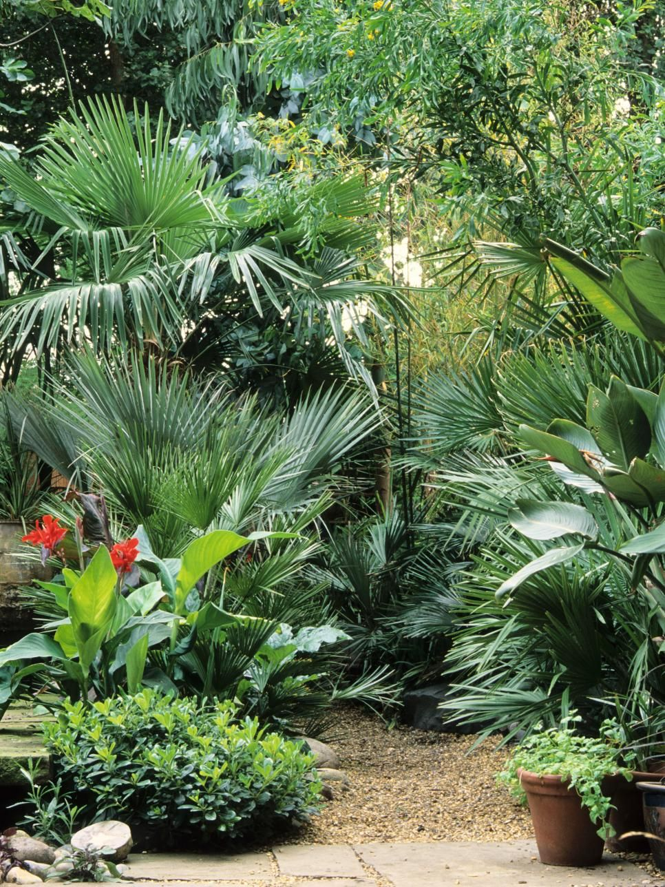 This Exotic Foliage Garden Uses Everything From Canna To Palms. A Pebble  Pathway Leads Into
