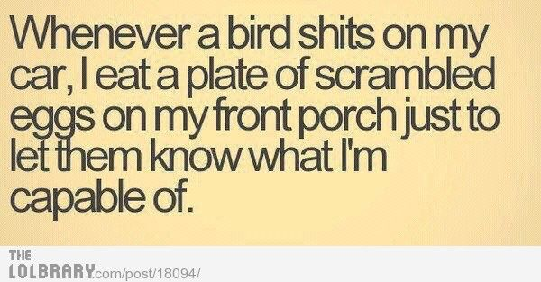 Gotta show the birds who's boss