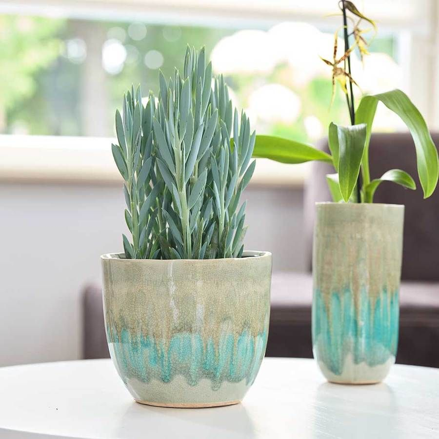 Indoor Ceramic Plant Pots Quality Indoor Plant Pots Hortology Indoor Plant Pots Ceramic Plant Pots Plant Pot Decoration