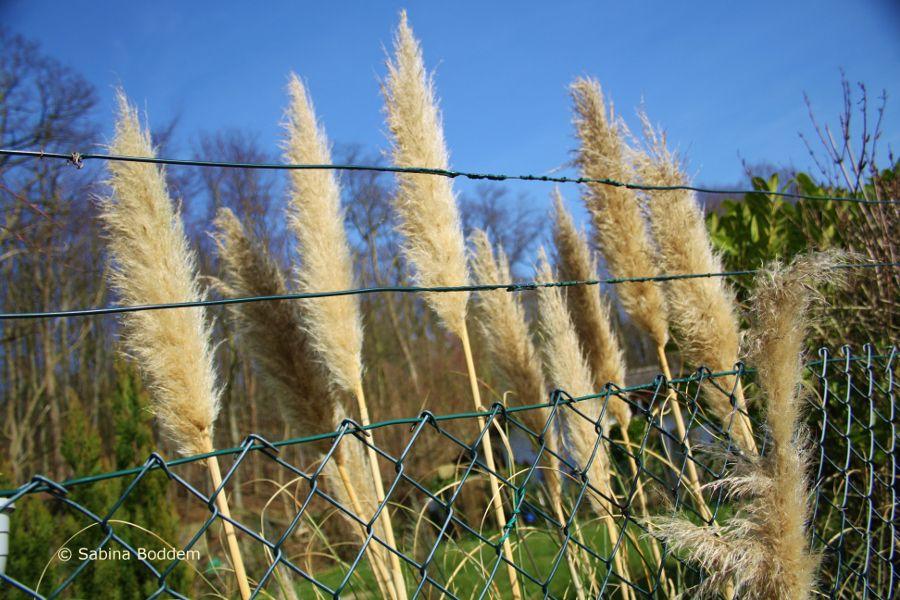 Frühlingsblüher # Gräser # Farbenreich