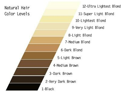 Google Search Technically There Are Only 1 10 Levels Natural Hair Color Hair Color Chart Hair Levels