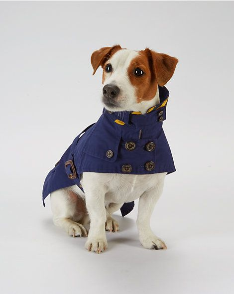 Dog Trench Coat For The Pet Home Ralphlauren Com Mazlici