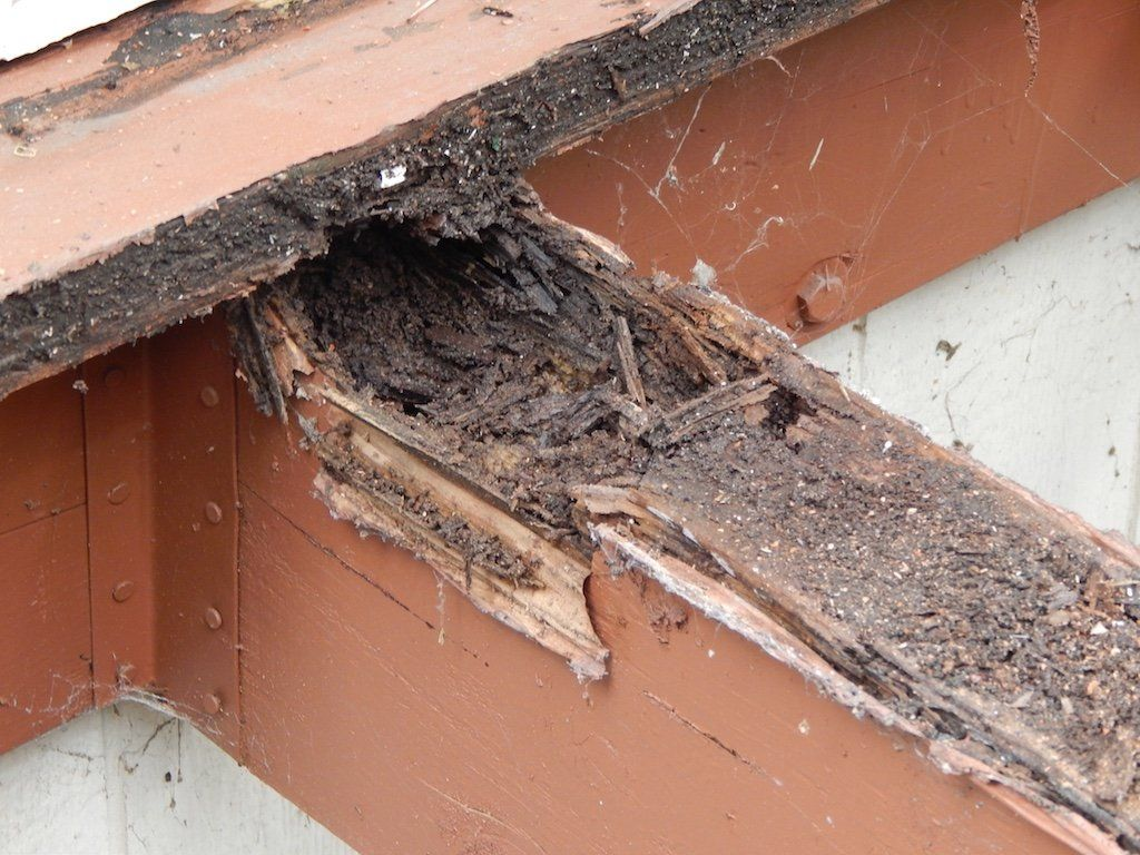 imus cap | deck in 2019 | termite control, termite treatment