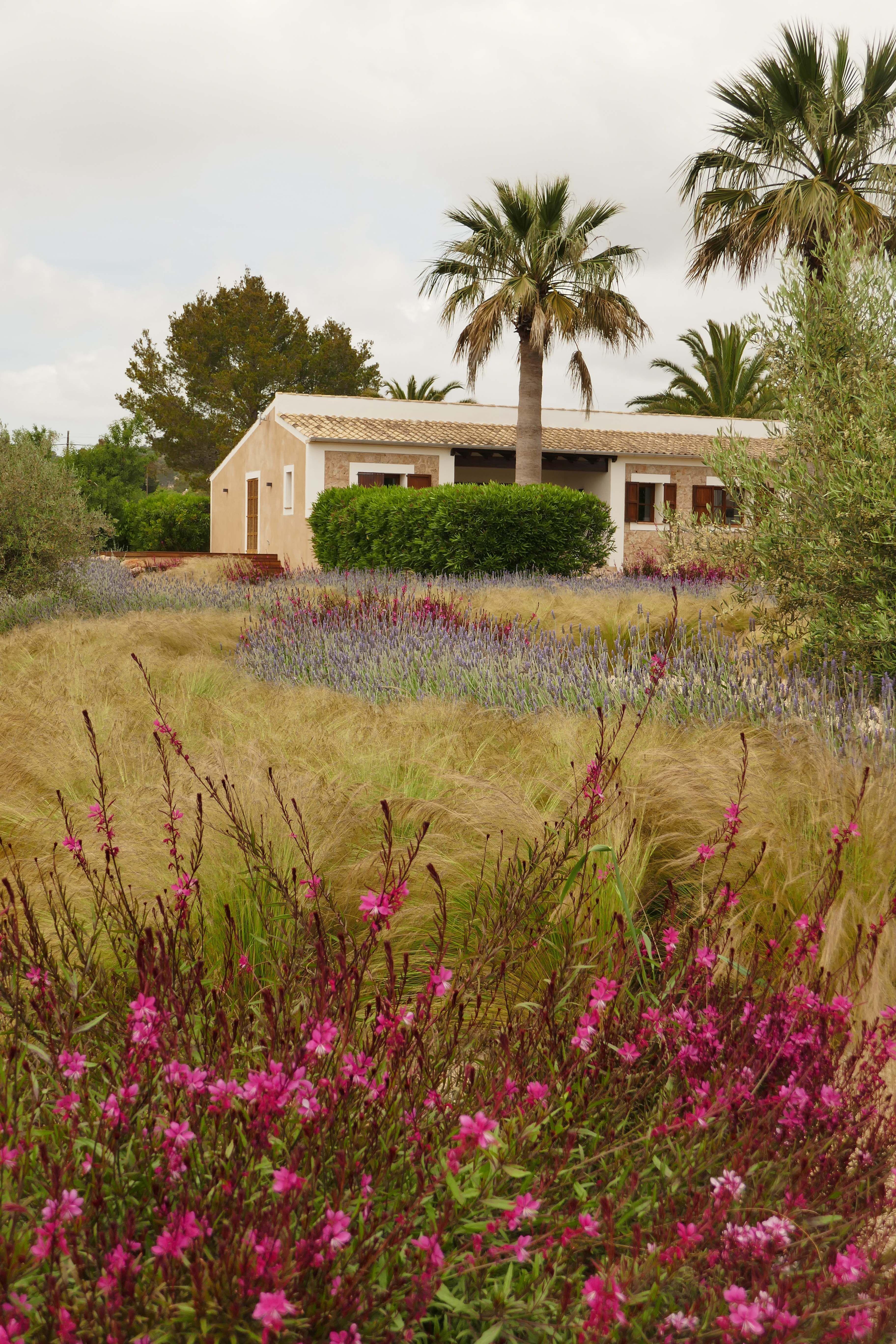 One of Ali Warren-Gash\'s signature aromatic meadows. | Mediterranean ...