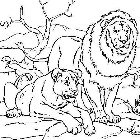 lionne dessin couleur good coloriage du roi lion moderne portrait animaux coloriage imprimer. Black Bedroom Furniture Sets. Home Design Ideas