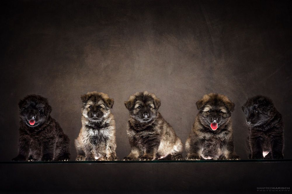 puppies by Manfred Karisch on 500px