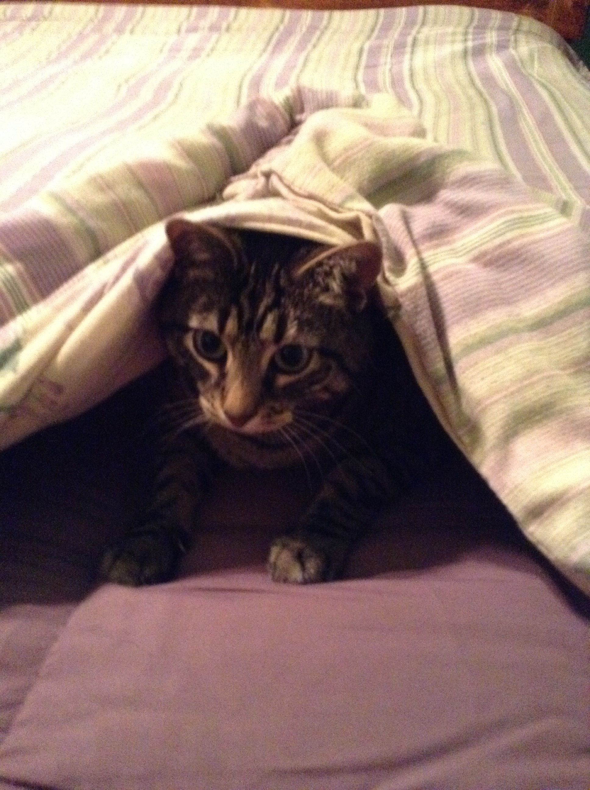 Tucked in for a long winters nap! Cats, Animals, Long winter