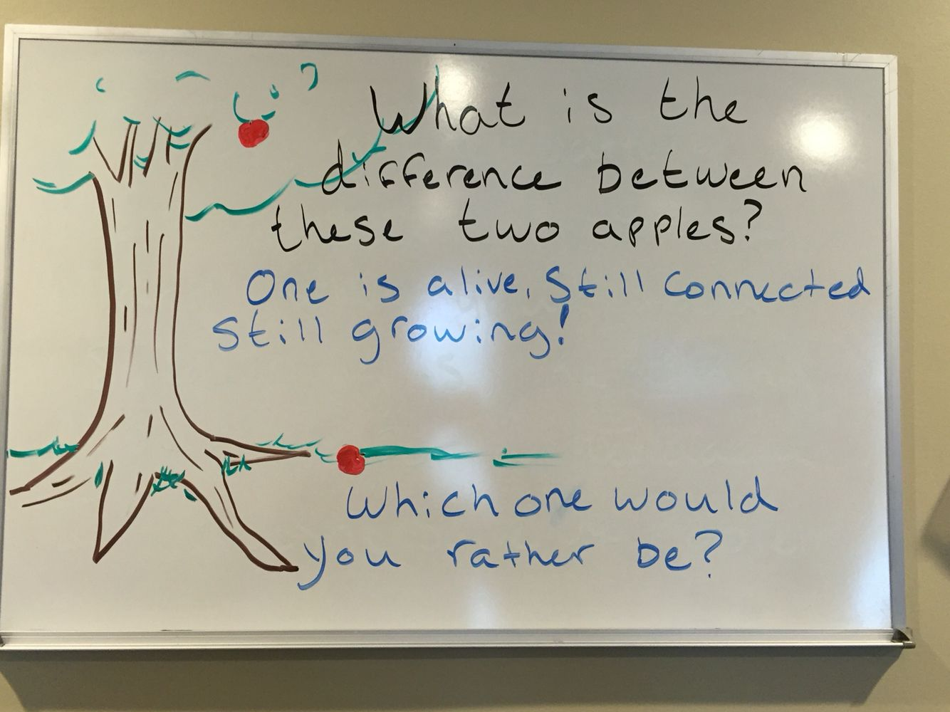 weekly chiropractic whiteboard which apple would u rather be