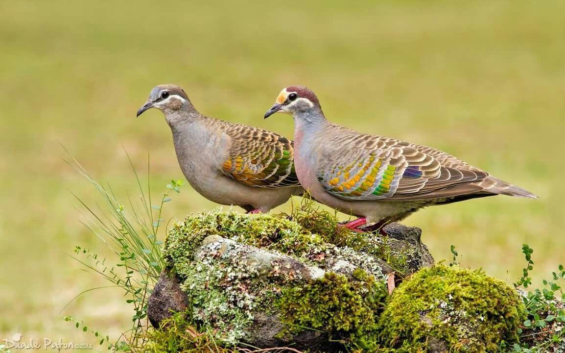 Pin by Larry L on Animals Beautiful birds, Bird