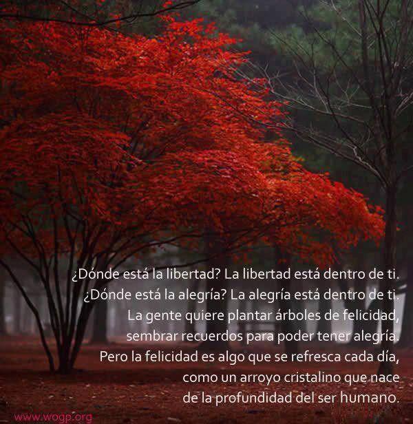 Tweets con contenido multimedia de Armonia (@Arnaldosoy) | Twitter