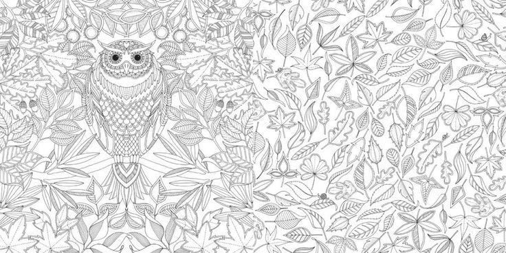 Johanna Basford Secret Garden An Inky Treasure Hunt And Colouring Book Pesquisa Google Owl