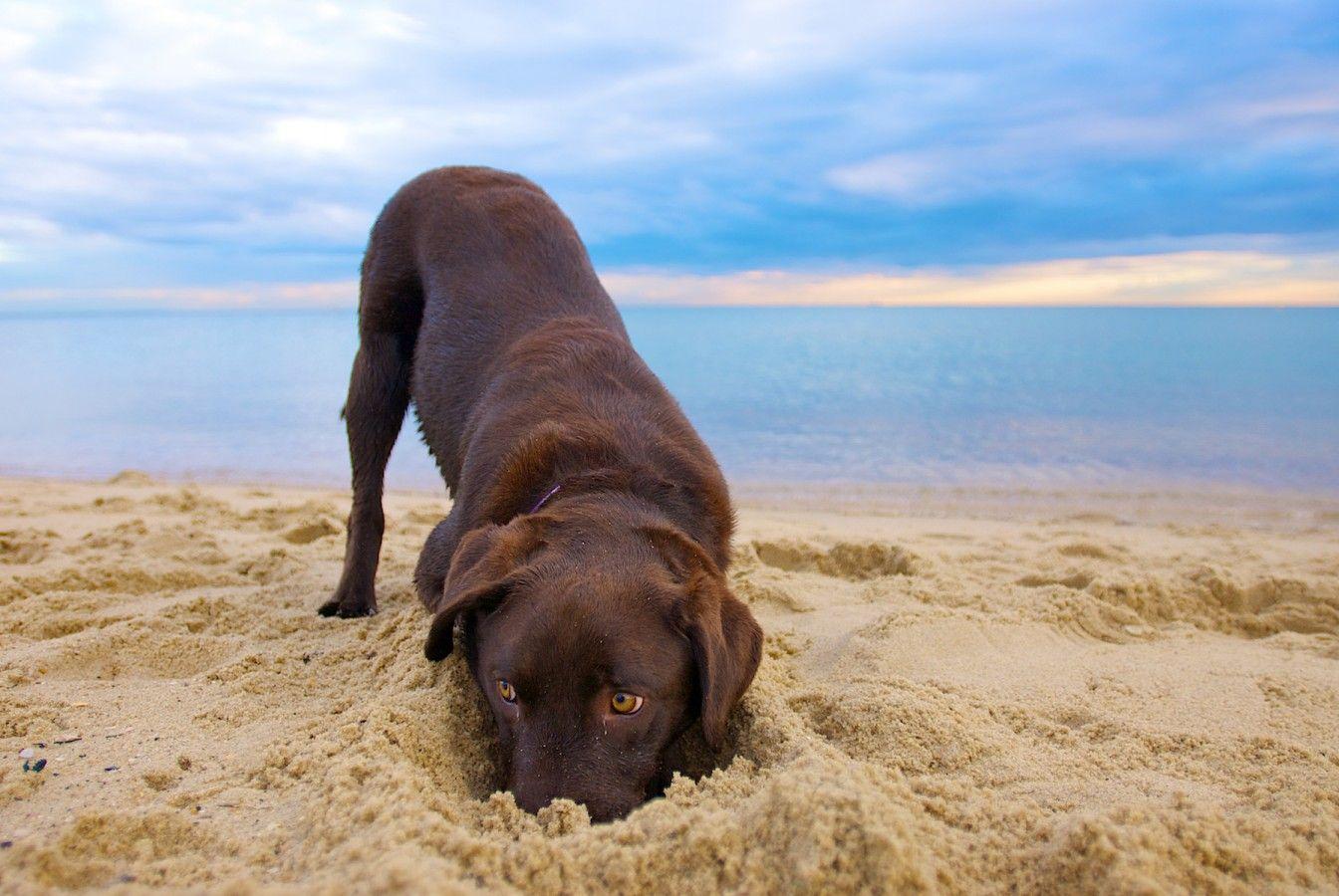 Dog Portraits, Dog Photography Brisbane and Melbourne