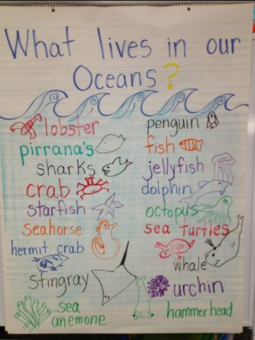 What lives in our oceans? Chart | Preschool Teaching Ideas ...