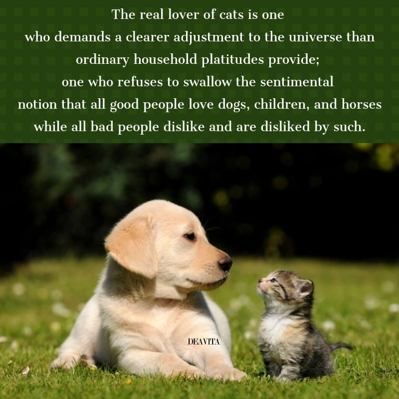 Cats Vs Dogs Quotes And Funny Sayings For Your Beloved Pets Dog