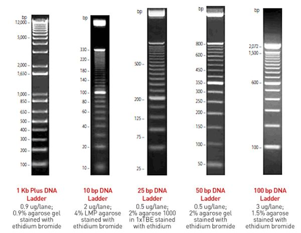 Track It Dna Ladders Gels Jpg 600 465 Pixels Bar Chart Pixel Dna