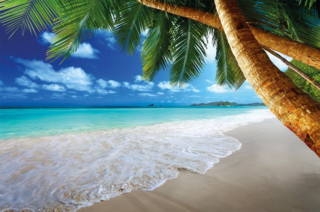 fotomural playa de arena con palmas y mar mural playa de paraiso sandy beach with palm trees and the sea photo wallpaper paradise beach and palm trees mural xxl beach wall decoration 55 inch x inch by great art