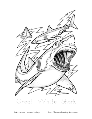 Here Are Free Printables To Learn About Sharks Malvorlagen