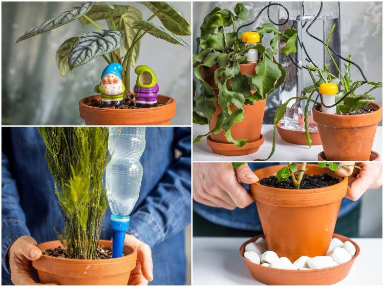 Istnieje Wiele Sposobow Podlewania Roslin W Czasie Wakacji Najlepszy Z Nich To Poprosic O Pomoc Sasiada Ale Co Zrobic Watering Globe Planters Planter Pots