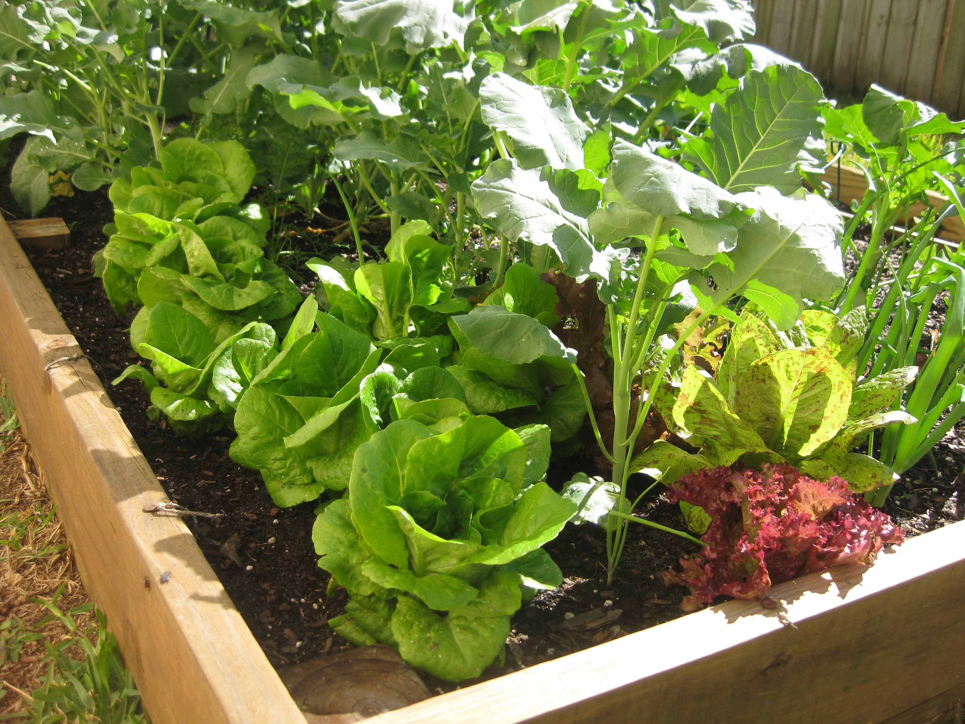 Lovely Ten Florida Gardening Websites Now That Summeru0027s Over And It Will Soon Stop  Hitting 90 Daily, Itu0027s Time To Think About Gardening!