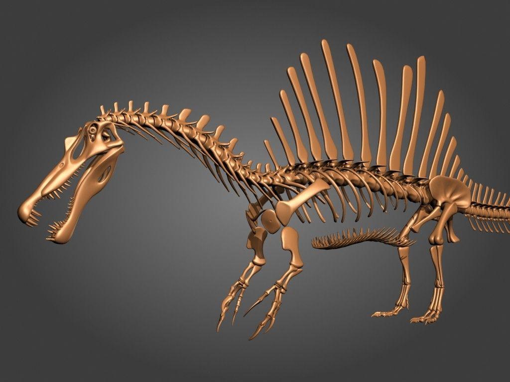 Картинки скелет спинозавра