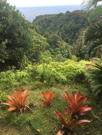 Photo of Garden of Eden Arboretum & Botanical Garden | Maui ...
