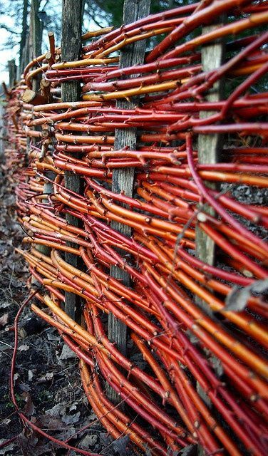 Red Twig Dogwood Willow Fence Red Dogwood Red Twig Dogwood