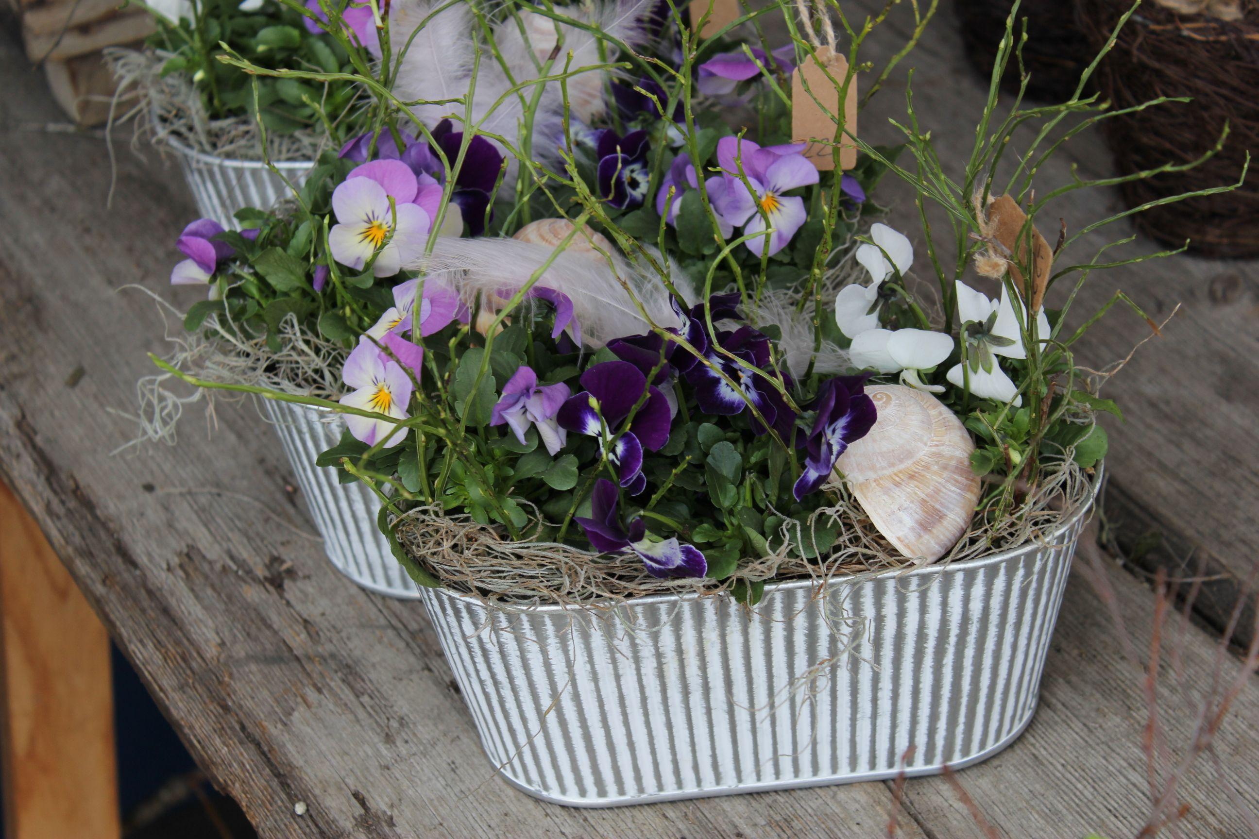 Viola cornuta gemischt in Blechgefäss | Blumen online ...