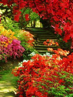 Colors Of Nature Mobile Wallpaper Naturaleza Flores