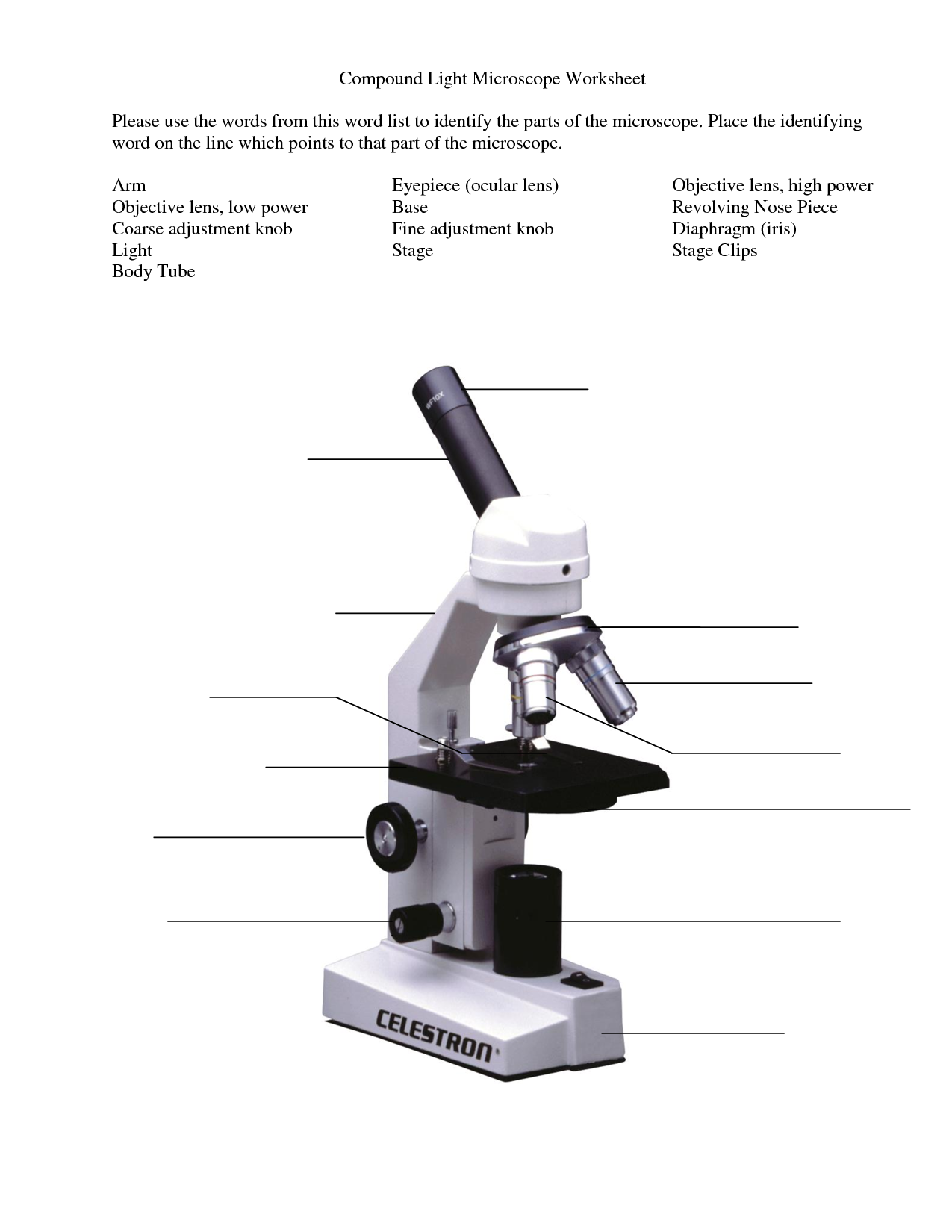 Worksheets Microscopes