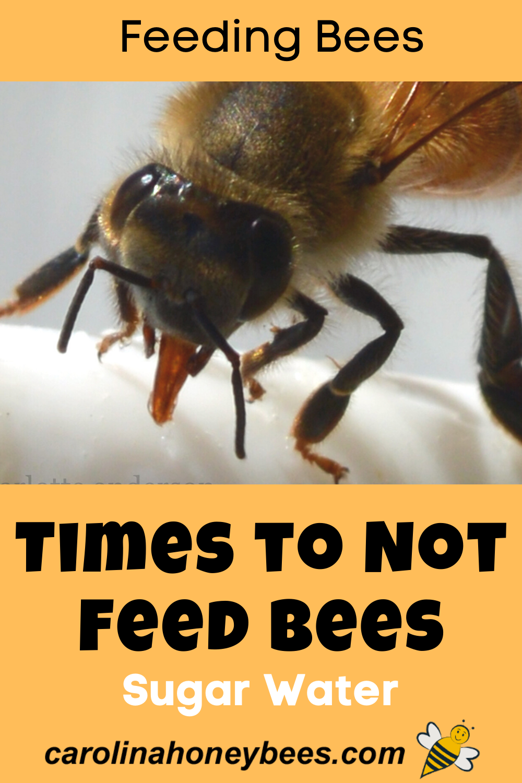5 Times You Should Not Be Feeding Bees Sugar Syrup Carolina Honeybees In 2020 Feeding Bees Bee Keeping Bee