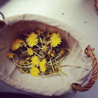 The Art of the Environment: The Earth has given us so many tools and ingredients to make our life magical! Take Dandilions for example, you may think that they are just a weed but when you brew them as a tea, nutrients come pouring out! Now that is magic!