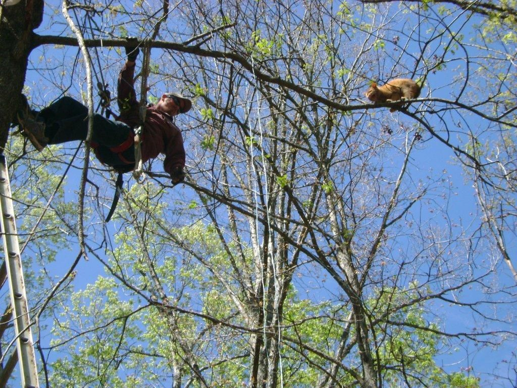 Do Firemen Rescue Cats From Trees