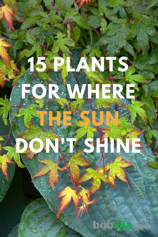 15 Plants for Where the Sun Don't Shine Hardy, shade plants and flowers bring…