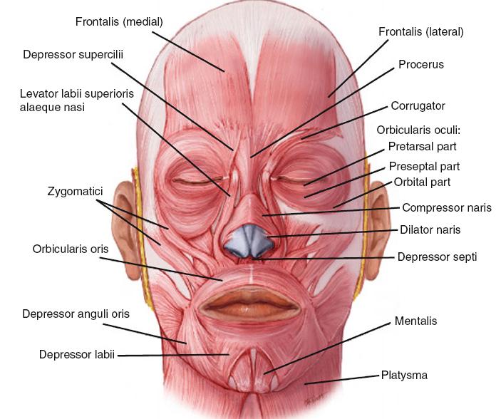 Eye and facial pain pics 799