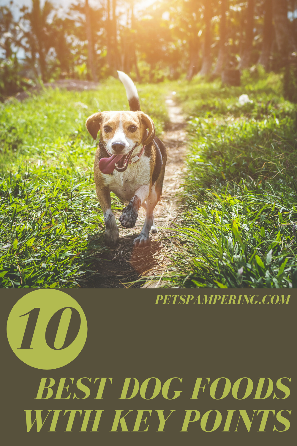 10 Best Dog Foods. List Of Best Dog Foods With Key Points. So If Dogs love us so much it is our duty to give them the best environment that they deserve. And for that, It is necessary to give them high-quality dog food. That is why I have researched and brought you the list of 10 best Dog Foods with 90% of satisfied customers #dog #dogsofinstagram #dogs #dogstagram #doglover #dogoftheday #doglife #doglovers #doggy #dogsofinsta #dogsofig #doggo #doglove #dogsitting #dogslife #dogsofinstaworld