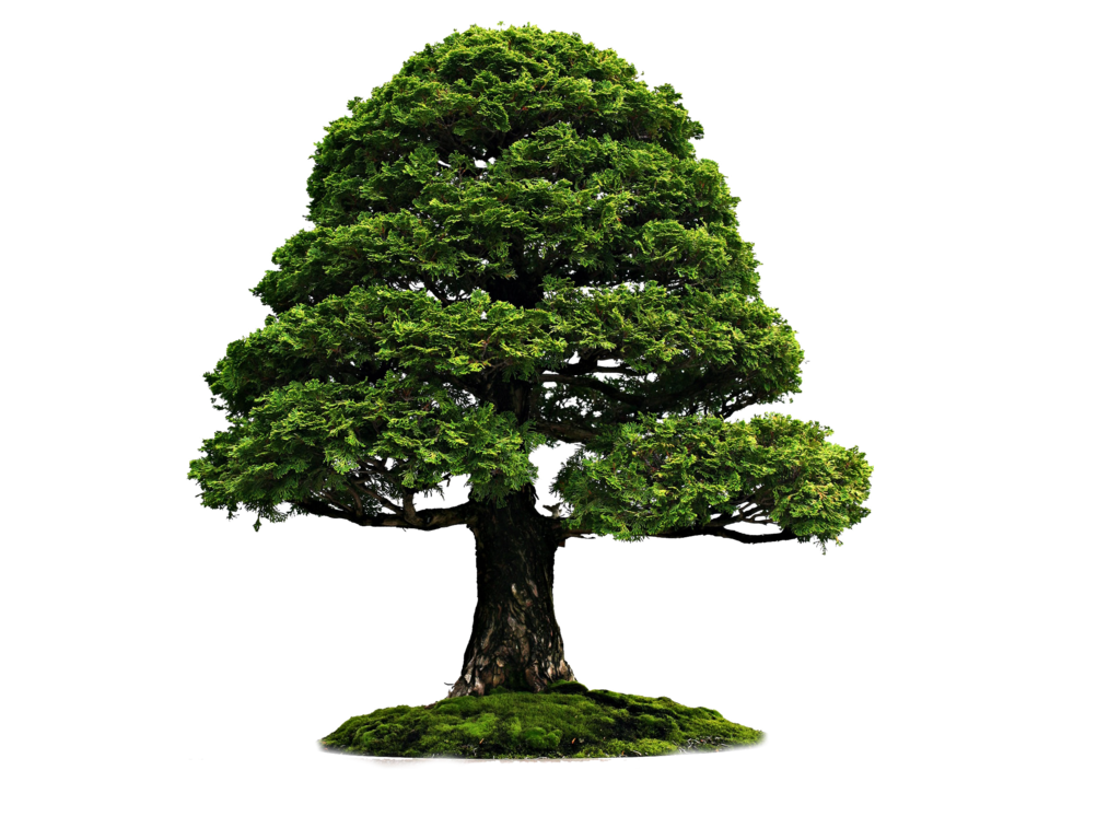 Png Tree 4r By Moonglowlilly On Deviantart Bonsai Tree Types Bonsai Tree Bonsai
