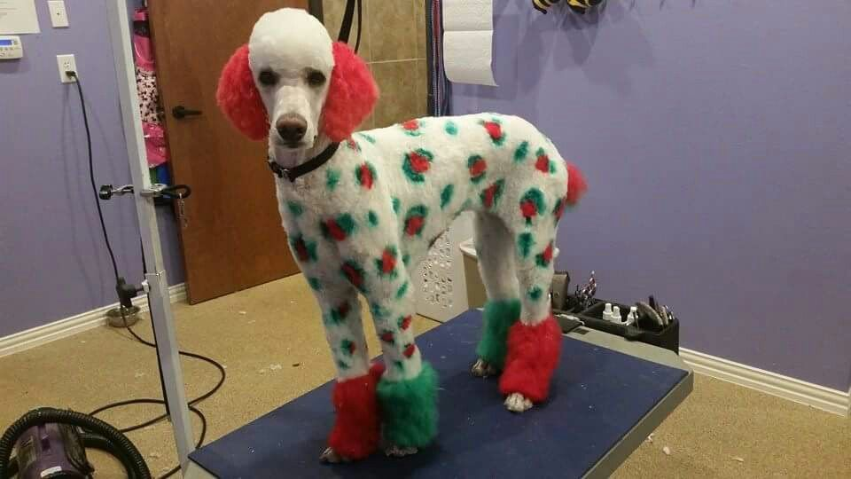 Castle Creek Pet Resort And Spa Pet Resort Creative Grooming Christmas Dog