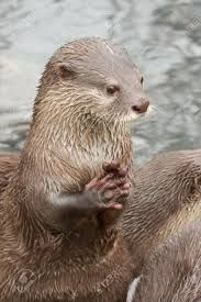 Image Result For River Otter Hands Sarahs Puppies Otters River