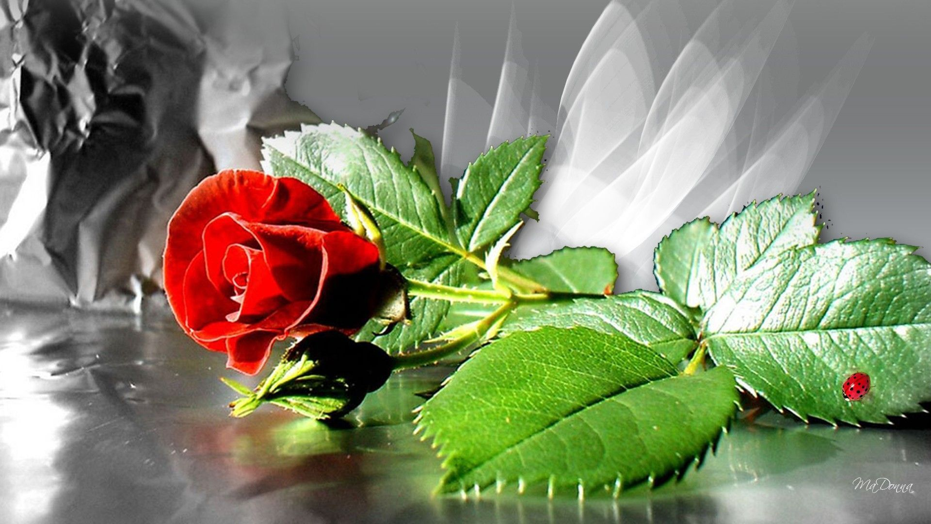 Red Rose Wallpapers Pictures Images Hd Wallpapers Pinterest