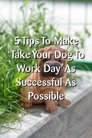 Sally McDonald Tells About 5 Tips To Make 'Take Your Dog To Work Day' As Successful As Possible #dogsdiys#catsanddogs#dogslove#dogdiystuff#dogcat#petscats#doglove#animaldiyspets#petstuff