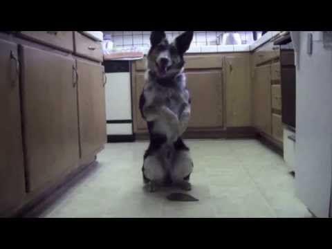 El perro más impresionante que he visto! - YouTube