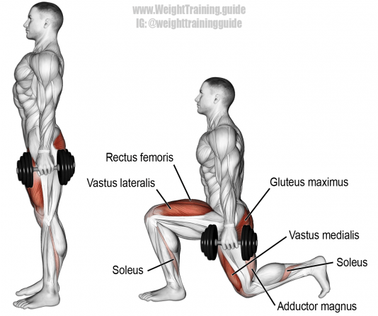 Dumbbell rear lunge. A compound unilateral exercise. Target muscles: Gluteus Maximu… (con imágenes) | Ejercicios de entrenamiento, Rutinas de entrenamiento, Ejercicios musculacion