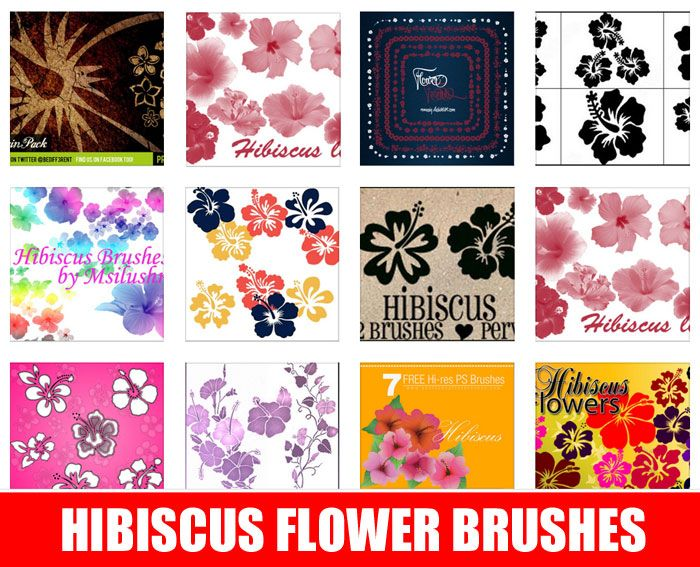 Give Your Designs A Summer Vibe With These Free Hibiscus Flower Brushes Hibiscus Clip Art Photoshop Brushes Free Free Photoshop