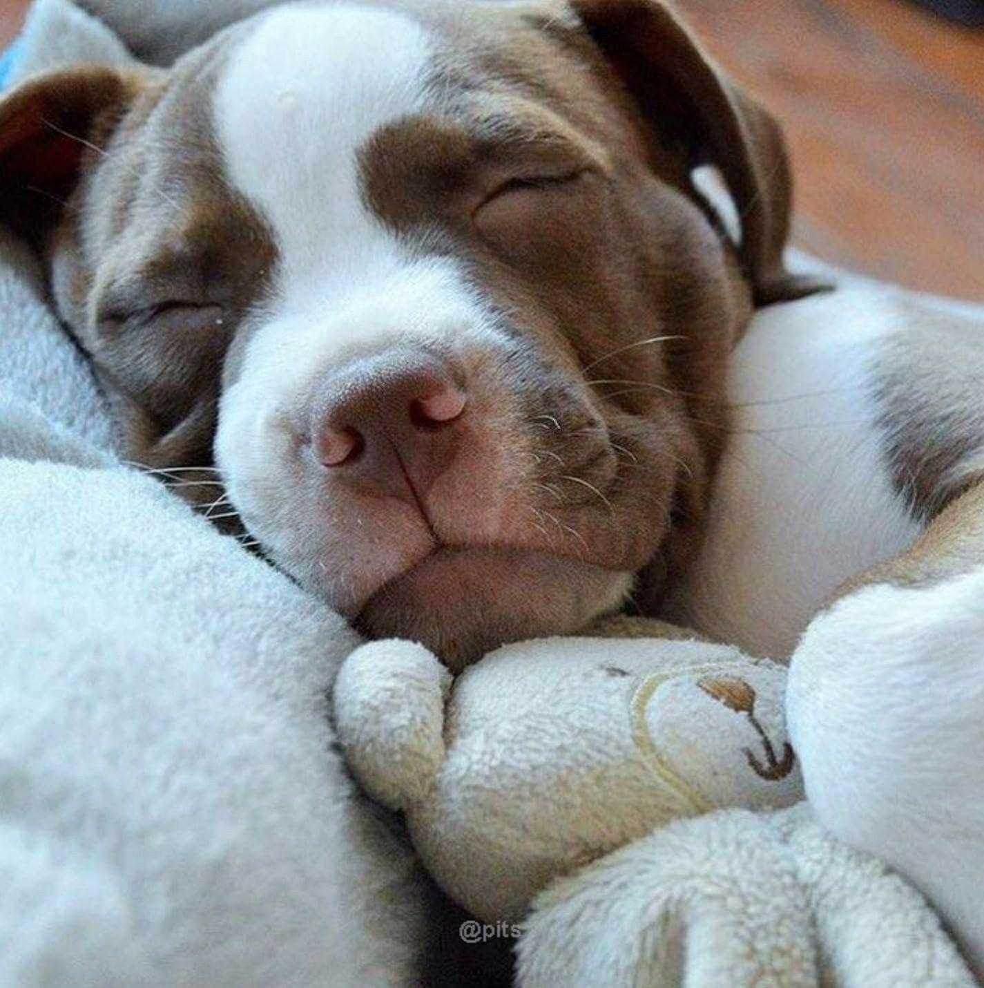 cute, sleeping puppy ~ such a cute face, and snuggling teddy bear