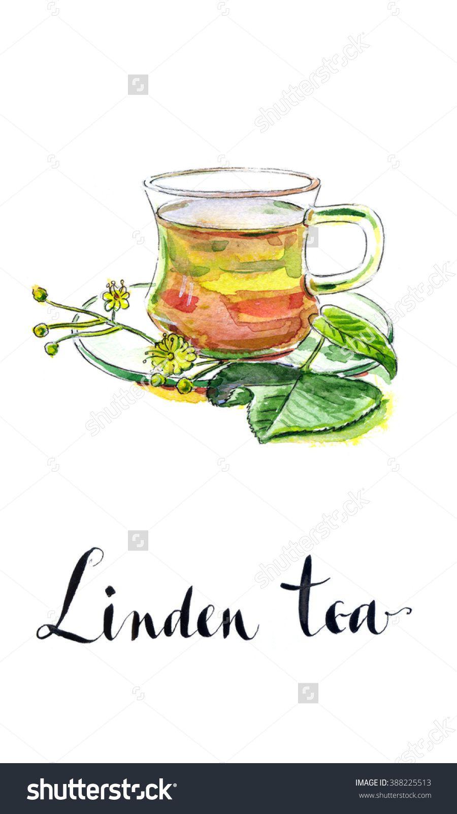 一杯健康林登茶和鲜花 手绘 水彩插图 食品及饮料 自然 海洛