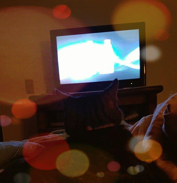 Gato viendo la tele