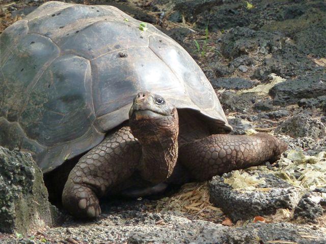 turtle. | Animals | Pinterest | Tortugas terrestres, Tortuga y Tortugas